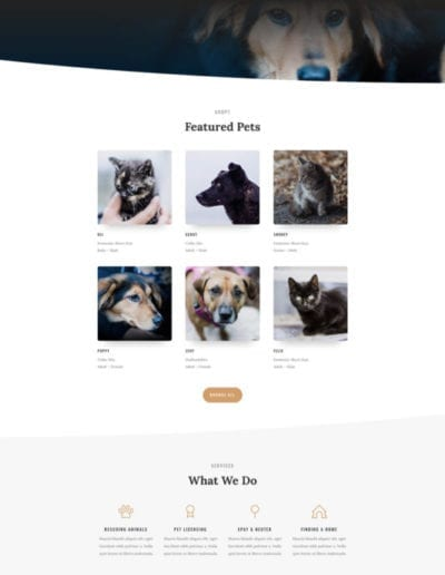 animal-shelter-home-page-533x1436